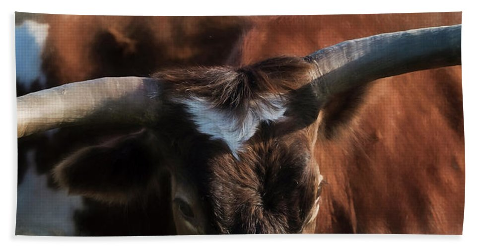 Longhorns Beach Towel featuring the photograph Longhorn by Pamela Steege