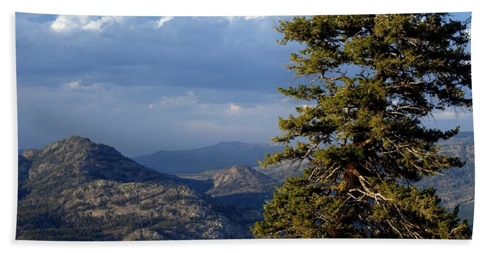 Yellowstone National Park Beach Towel featuring the photograph Lonly Tree by Marty Koch
