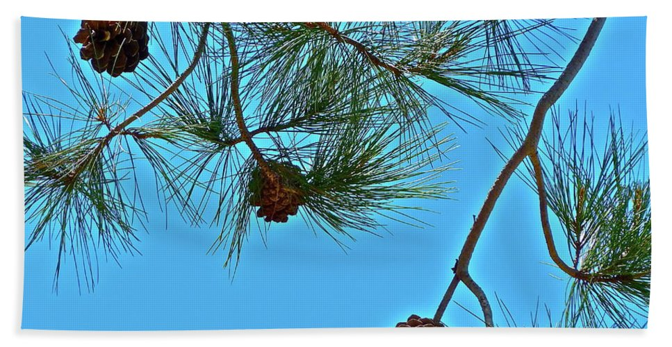 Trees Beach Towel featuring the photograph Look Up by Diana Hatcher