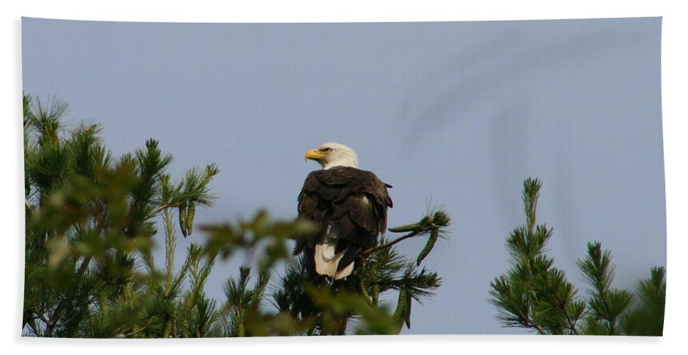 Bald Eagle Beach Towel featuring the photograph Looking Ahead by Neal Eslinger