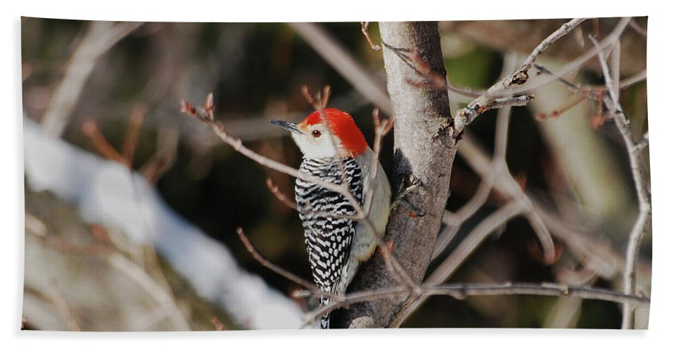 Woodpecker Beach Towel featuring the photograph Looking For A Place To Peck by Lori Tambakis