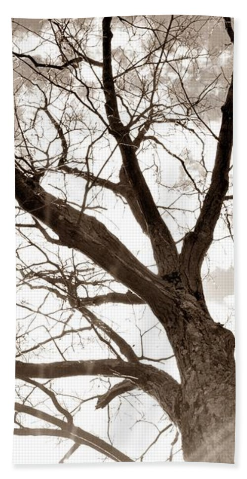 Tree Beach Towel featuring the photograph Looking Up In Sepia by Jennifer Wick