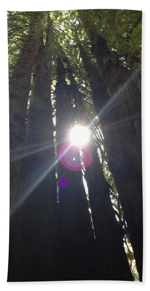 Trees Beach Towel featuring the photograph Looking up by Shari Chavira