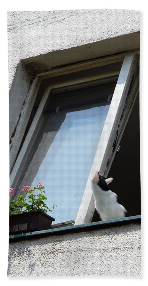 Cat Beach Towel featuring the photograph Looking Up by Valerie Ornstein