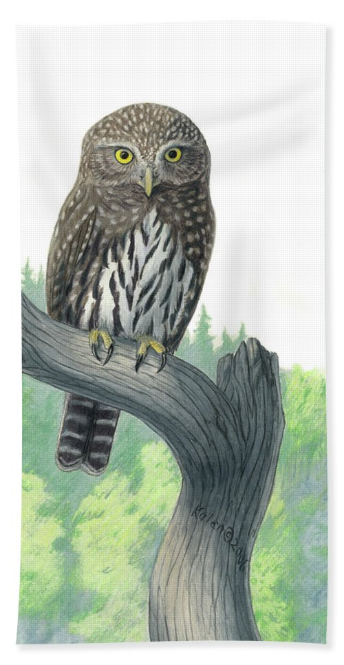 Owl Beach Towel featuring the drawing Lookout- Northern Pygmy-owl by Kalen Malueg