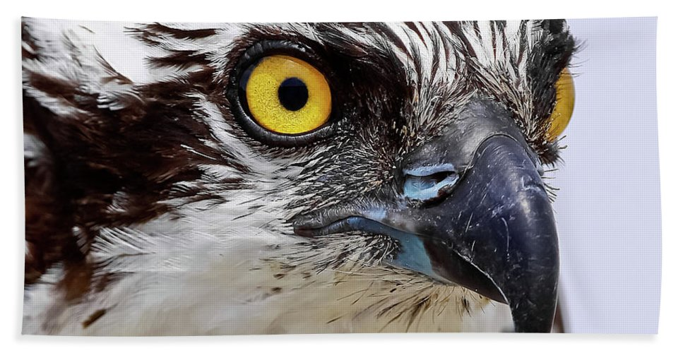 Osprey Beach Towel featuring the photograph Looks That Kill by Dennis Goodman
