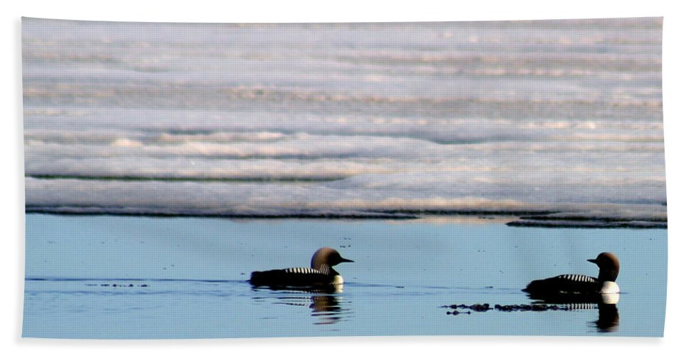 Loons Beach Towel featuring the photograph Loon On The Arctic by Anthony Jones
