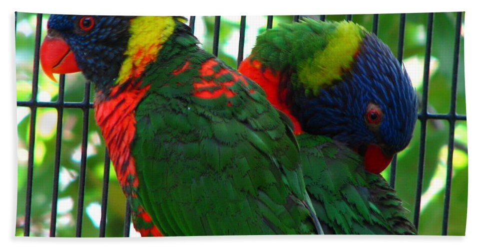 Patzer Beach Towel featuring the photograph Lory by Greg Patzer