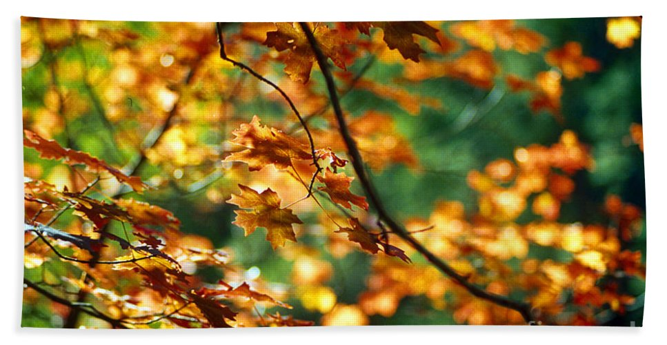 Fall Color Beach Sheet featuring the photograph Lost In Leaves by Kathy McClure