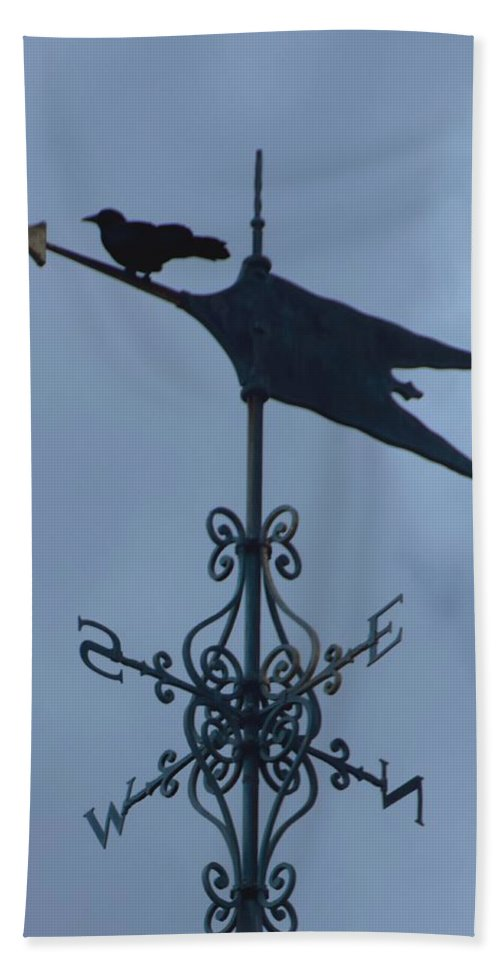 Bird Beach Towel featuring the photograph Lost by Steven Natanson