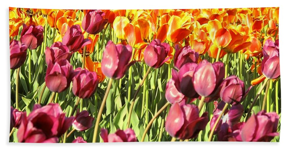 Tulips Beach Sheet featuring the photograph Lots Of Tulips by Ian MacDonald