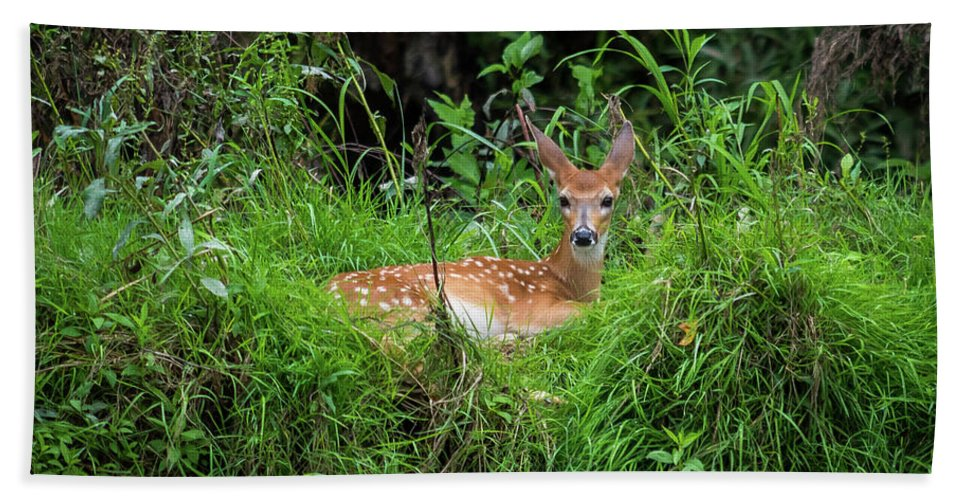 Fawn Beach Towel featuring the photograph Lounging Fawn by Thomas Morrow