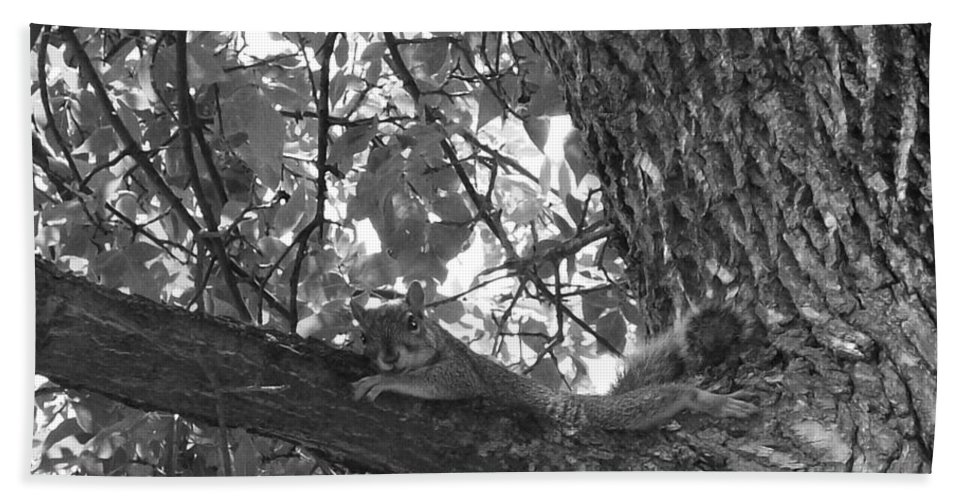 Squirrel Beach Towel featuring the photograph Lounging Squirrel by Sara Raber