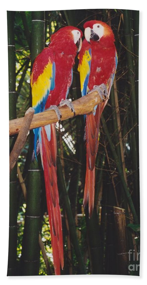 Birds Beach Towel featuring the photograph Love Birds by Michelle Powell