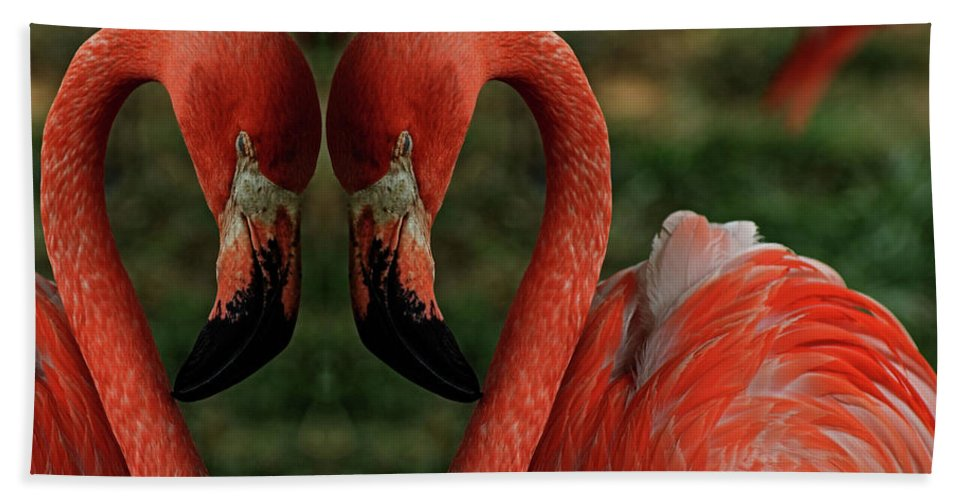 Birds Beach Towel featuring the photograph Love by Bob Welch