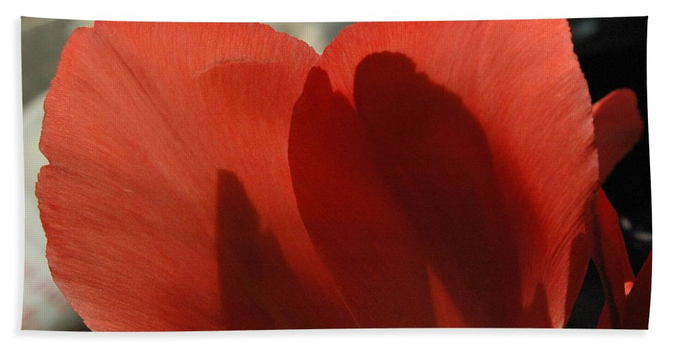 Tulips Beach Towel featuring the photograph Love Of A Tulip by Trish Hale
