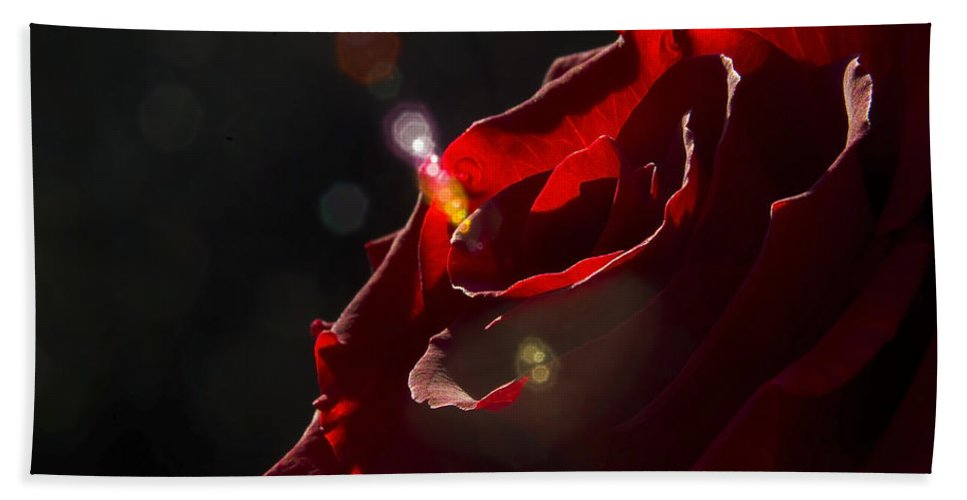 Black Beach Towel featuring the photograph Love Rose by Svetlana Sewell