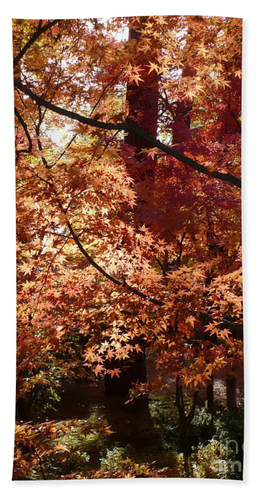 Fall Landscape Photograph Beach Towel featuring the photograph Lovely Autumn Tree by Carol Groenen