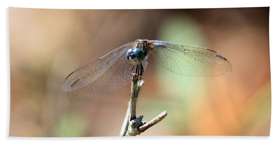 Dragonfly Beach Towel featuring the photograph Lovely Dragonfly by Carol Groenen