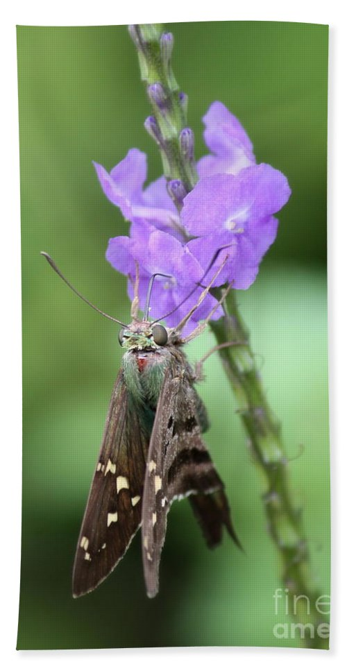 Nature Beach Towel featuring the photograph Lovely Moth On Dainty Flower by Carol Groenen