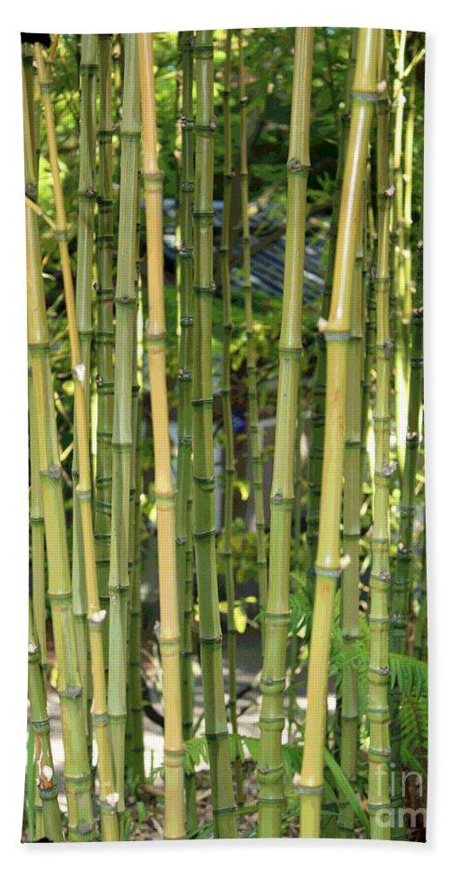 Bamboo Beach Towel featuring the photograph Lucky Bamboo by Carol Groenen