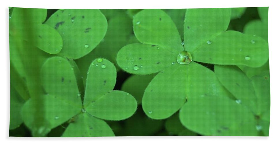 Luck Green Water Drop Clover Beach Towel featuring the photograph Lucky by Mandy Payne