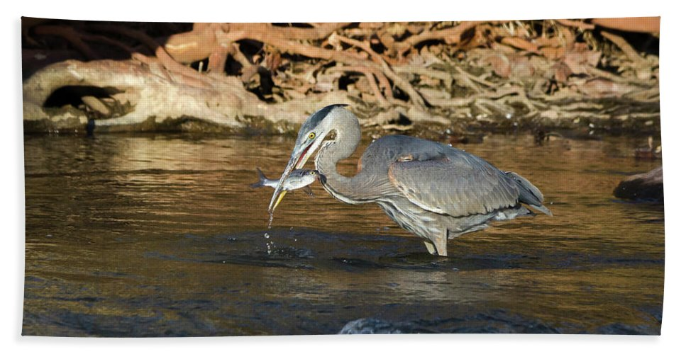 Heron Beach Towel featuring the photograph Lunch On The Neuse River by George Randy Bass