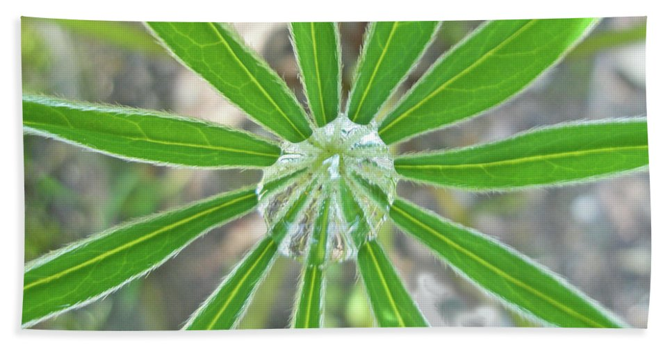 Raindrop Beach Towel featuring the photograph Lupine Leaf And Raindrop by Mother Nature