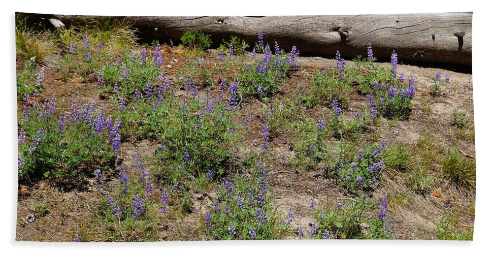 Dead Tree Beach Towel featuring the photograph Lupines And A Log by Beth Collins