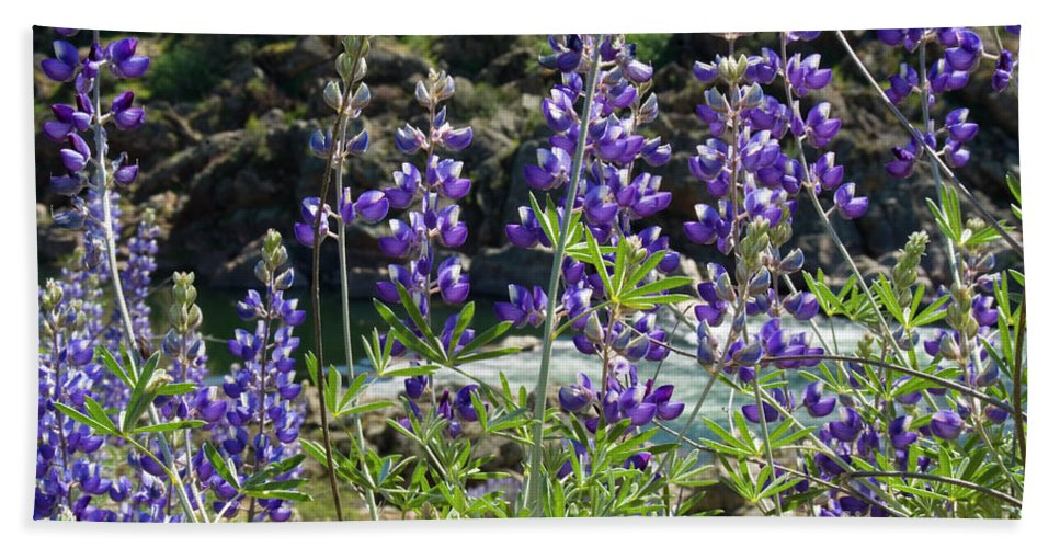 Lupine Beach Towel featuring the photograph Lupines At The River by Jim And Emily Bush