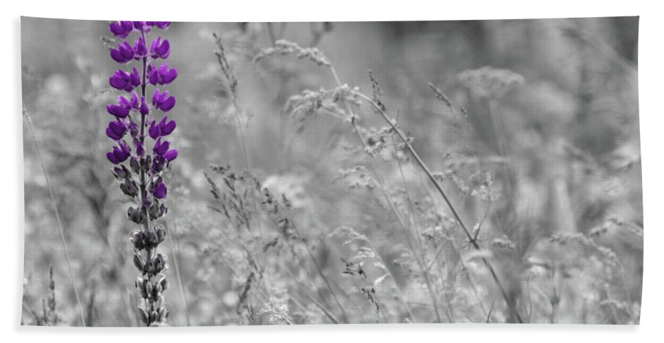 Canada Beach Towel featuring the photograph Lupins 2016 26a by Rodger Wilkie