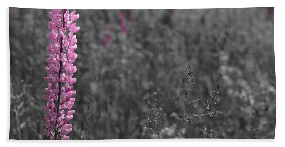 Canada Beach Towel featuring the photograph Lupins 2016 27a by Rodger Wilkie