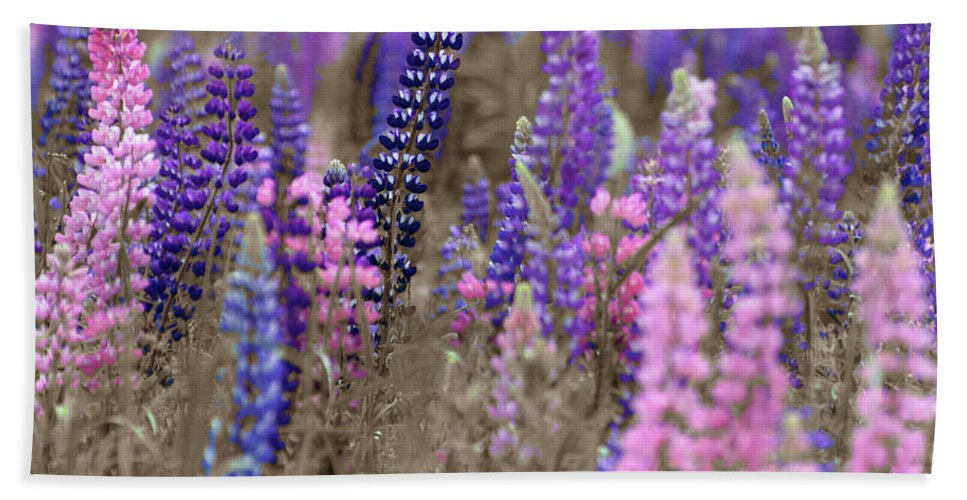Canada Beach Towel featuring the photograph Lupins 2016 28a by Rodger Wilkie