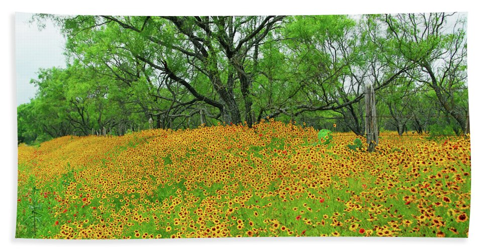 Coreopsis Beach Towel featuring the photograph Lush Coreopsis by Lynn Bauer