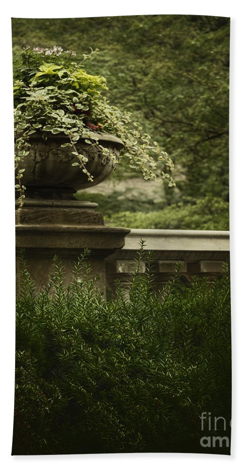Ivy Beach Towel featuring the photograph Lush by Margie Hurwich