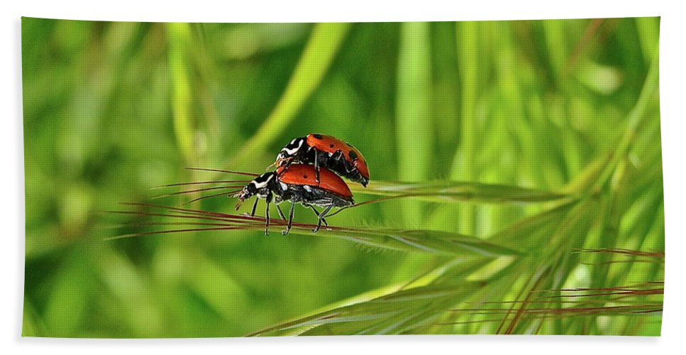 Insects Beach Towel featuring the photograph Macro Acrobats by Diana Hatcher