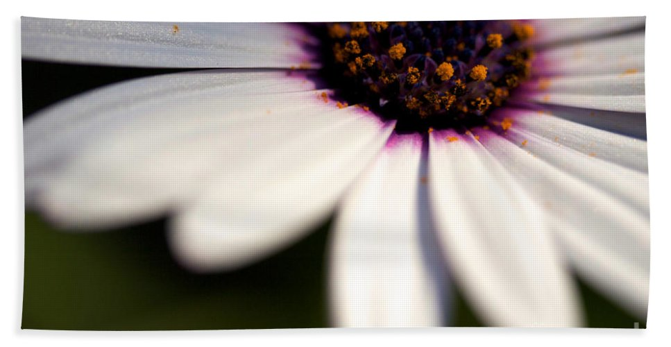 Daisy Flower Beach Towel featuring the photograph Macro Daisy by Brooke Roby