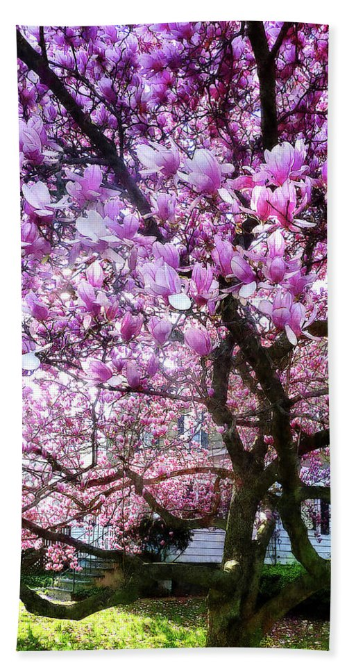 Magnolia Beach Towel featuring the photograph Magnificant Magnolias by Susan Savad