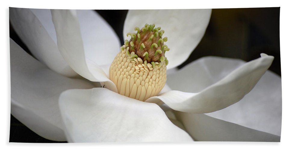 Flowers Beach Towel featuring the photograph Magnolia 2 by Robert Meanor