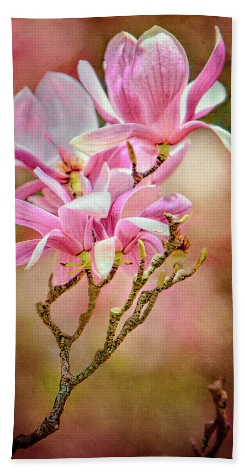 Magnolia Beach Towel featuring the photograph Magnolia Branch by Chris Lord