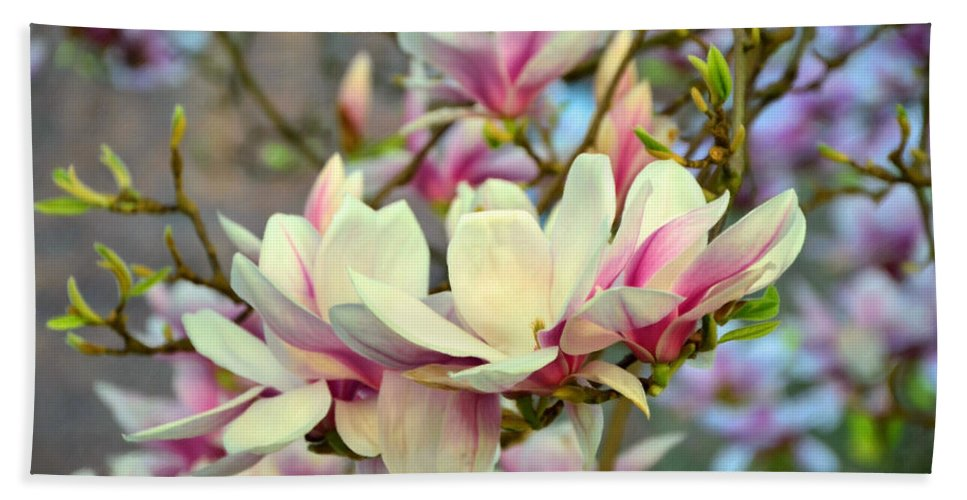 Magnolia Spring Beach Towel featuring the photograph Magnolia Spring by Georgiana Romanovna