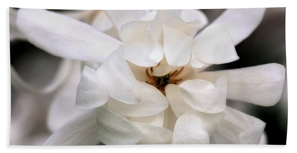 Flower Beach Towel featuring the photograph Magnolia Square by Angela Rath