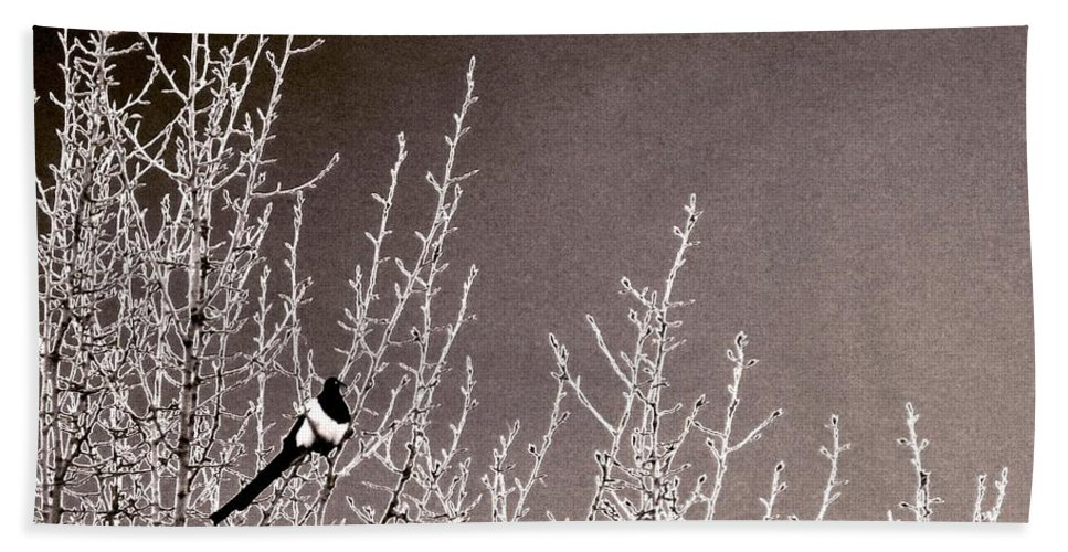 Magpie Beach Towel featuring the photograph Magpie by Will Borden