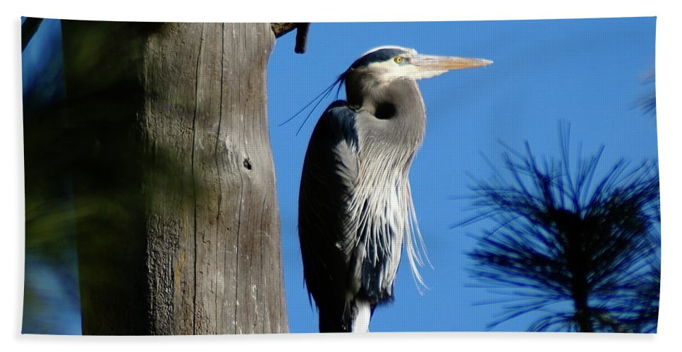 Spokane Beach Towel featuring the photograph Majestic Great Blue Heron by Ben Upham III