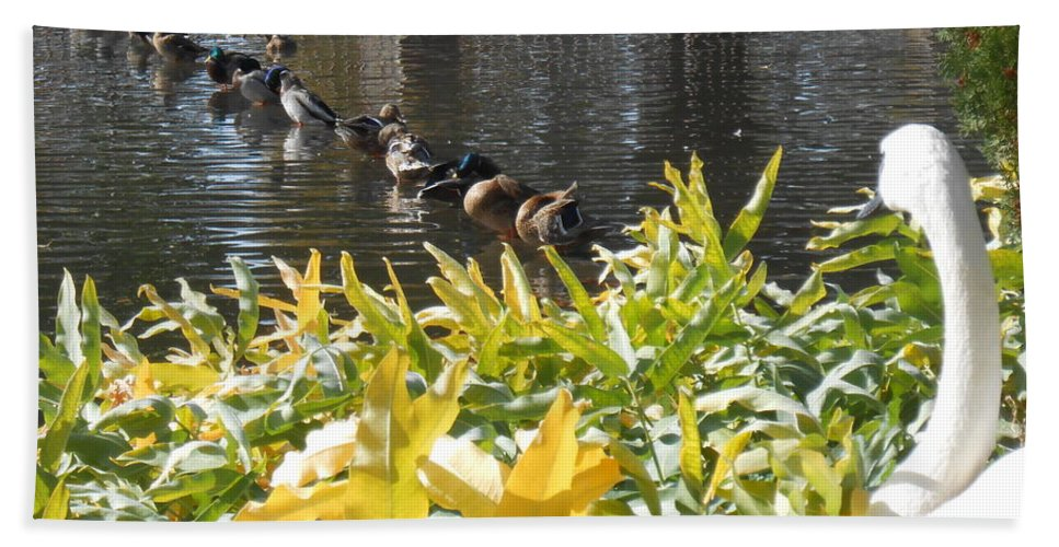 Trumpeter Swan Beach Towel featuring the photograph All My Ducks In A Row by LKB Art and Photography