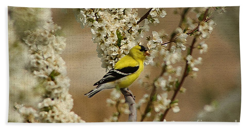 Finch Beach Towel featuring the photograph Male Finch In Blossoms by Cathy Beharriell