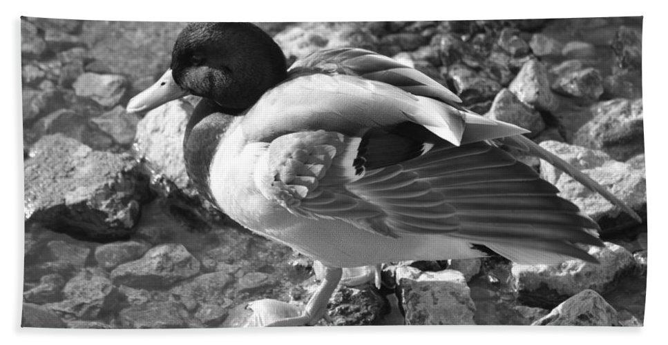 Duck Beach Towel featuring the photograph Mallard by Lauri Novak
