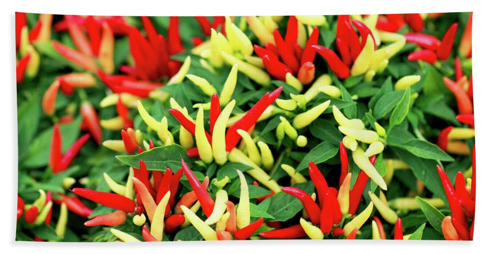 Farmers Market Beach Sheet featuring the photograph Many Peppers by Todd Klassy