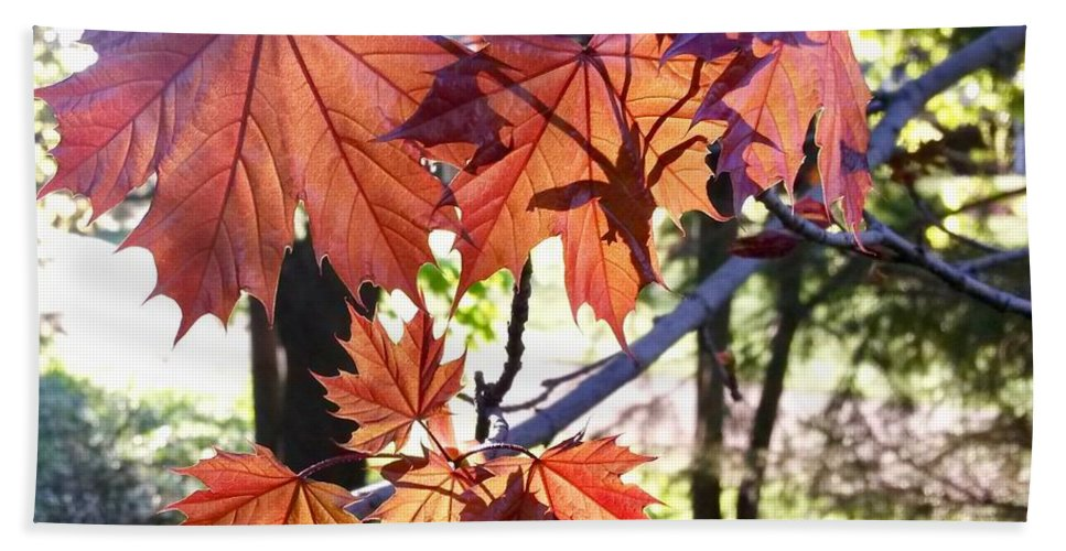 Maple Tree Beach Towel featuring the photograph Maple by Aurora Bautista