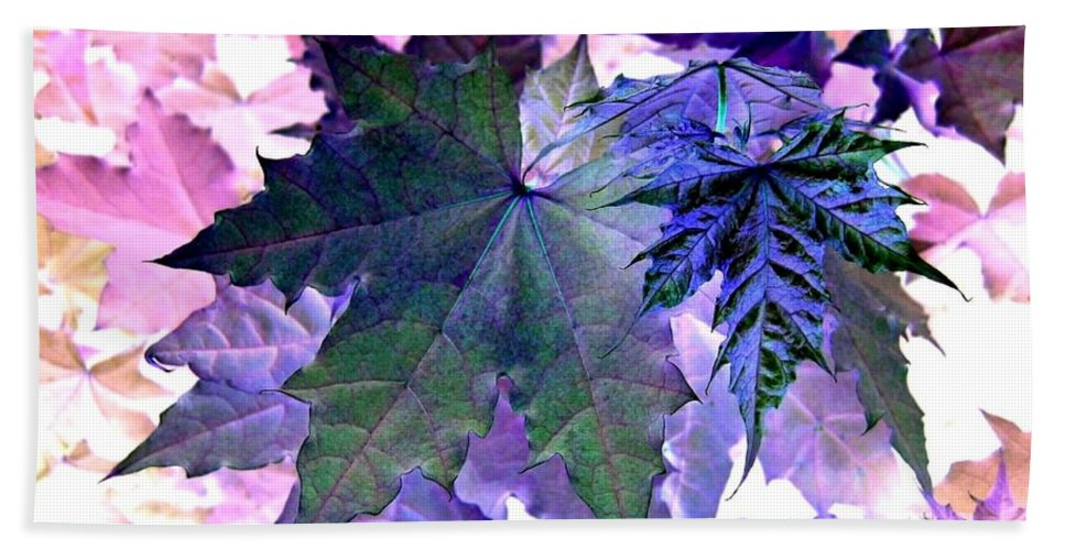 Dramatic Beach Towel featuring the photograph Maple Magnetism by Will Borden